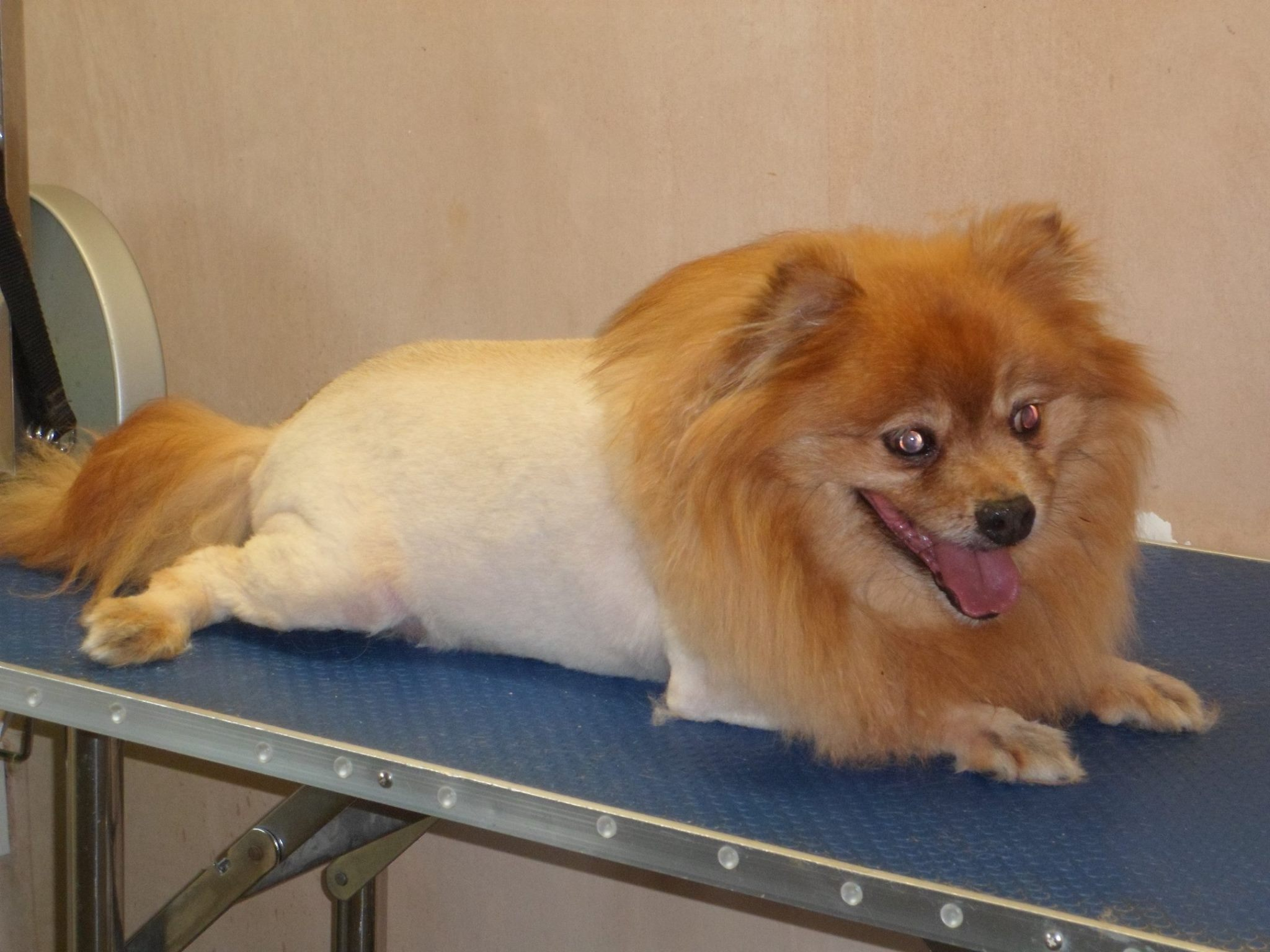 Dog And Cat Grooming Gallery Pet Care Home Visits Runcorn