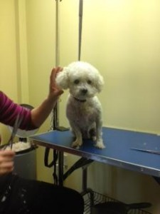 Millie being groomed
