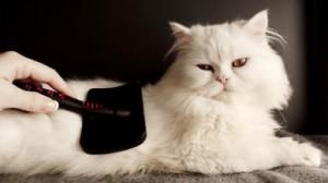 cat-grooming-at-poochy-woochy