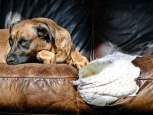 dog-behaviour-2
